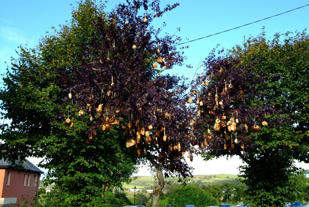 The Bread Tree